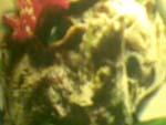 gadon daging solo